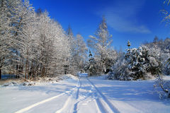 Snow-covered road in the forest. Morning after a heavy snowfall. Snow-covered road in the forest Royalty Free Stock Images