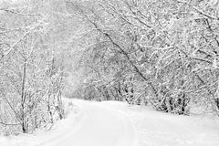 Snow-covered road in the forest Stock Photos