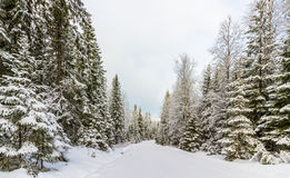 Snow covered road and forest Norway Stock Photos