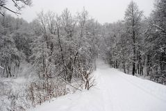 Snow-covered road in the forest Russia. Snow-covered road in the forest of Russia, after snowfall, beautiful forest, white trees Stock Image
