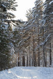 Snow-covered road in the forest. Somewhere in Siberia. Russia Royalty Free Stock Images