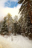 Snow-covered road on the fringe of the forest Stock Images