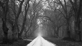Snow-covered road in a gloomy forest. Black and white version Royalty Free Stock Photo