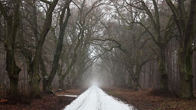 Snow-covered road in a gloomy forest. Stock Images