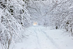 Snow-covered Road In Winter Forest. Stock Photo