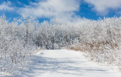 Snow covered road leading into the woods Stock Image