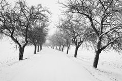 Snow covered road with alley of trees during winter season Royalty Free Stock Photo