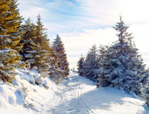 Snow-covered road in the mountains, snow-covered trees, beautifu. L warm sunny day. Winter. Christmas  landscape Stock Image