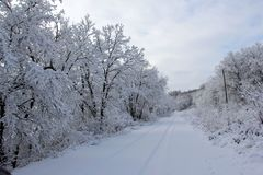 Snow covered road with single set of tracks in Manitoba royalty free stock photos