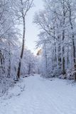 Snow covered road through a frosty forest stock photo