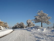 Snow covered road at the top o. Quiet winter day afternoon in the mountains, snow covered pine trees, a lonely road at the op of the hill Stock Photo