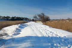 Snow-covered road with traces of people. Snow-covered country road, between 2 lakes with canes, traces of people Stock Photo