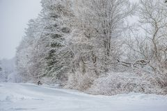 Snow-covered road and trees during a snowfall. Branches of trees covered with fluffy snow Royalty Free Stock Photos