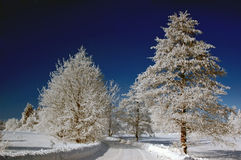 Snow-covered road and trees Royalty Free Stock Photography