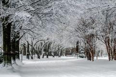 Snow covered road and trees after winter storm Stock Photography