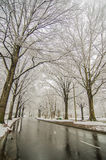 Snow covered road and trees after winter storm Stock Image