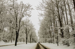 Snow covered road and trees after winter storm Stock Images