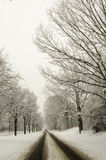 Snow covered road and trees after winter storm Royalty Free Stock Photography