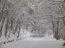 Natural snowy arch above the road. Snow-covered road under the arch of snow-cowered branches of trees Stock Photos