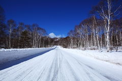 Snow covered road of white birch Stock Images