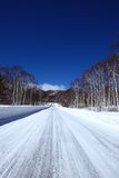 Snow covered road of white birch Royalty Free Stock Photo