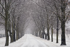 Snow covered road in winter Royalty Free Stock Image