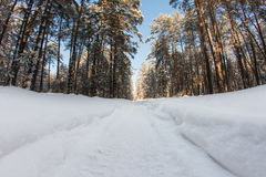 Snow-covered road in winter forest Stock Photo