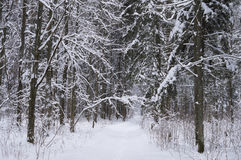 Snow-covered road in winter forest Stock Images