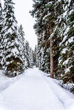 Snow covered Roads and Trees Stock Photo