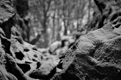 Treacherous Path. Snow-covered rocks and tree-roots at the crest of an ascending forest trail Royalty Free Stock Photography