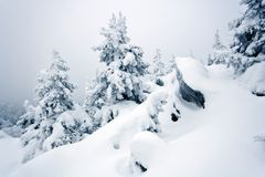 Snow-covered rocks, trees in Ural. Siberia.Taiga. Stock Image