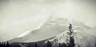 Snow Covered Rocky Mountain. A snow covered Mount Hector of the Canadian Rockies in Banff Royalty Free Stock Photography