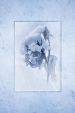 Snow Covered Rose. Snow-covered rose rendered as antique cyan tone print framed against a cool blue marble texture background royalty free stock photo