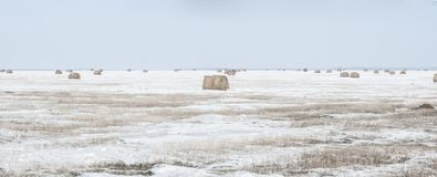 Snow Covered Round Bale Of Hay In A Farmers Field Stock Photography
