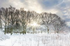 Snow covered rural trees with early morning sunrise stock photos
