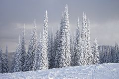Snow Covered Schweitzer Royalty Free Stock Photo