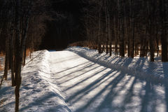 Snow Covered Shadowy Pathway. A winter walk on a shadowy tree lined pathway Royalty Free Stock Image