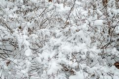 Snow-covered shrub Royalty Free Stock Images