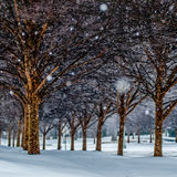 Snow covered sidewalk alley with trees Stock Image