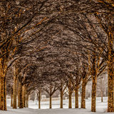 Snow covered sidewalk alley with trees Stock Photos