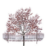 Snow-covered single tree isolated on pure white background royalty free stock images