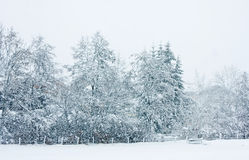 The snow-covered, snowfall Royalty Free Stock Photo