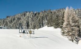 Snow-covered sparren Royalty-vrije Stock Afbeeldingen