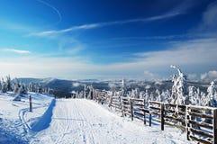Snow-covered sparren en berg bij achtergrond Stock Afbeelding