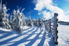 Snow-covered sparren en rimy houten omheining Royalty-vrije Stock Foto's