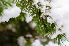 Snow-covered spartak in het de winterbos stock foto