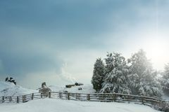 Snow-covered spruce Stock Photography
