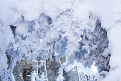 Snow covered spruce branches. Winter nature Stock Photography