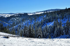 Snow covered spruce trees and blue sky Stock Images