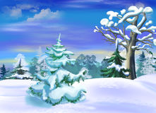 Snow Covered Spruce  in a Winter Forest Clearing Stock Image
